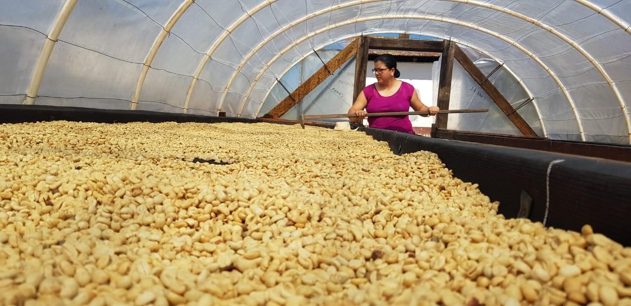 Café en Granos Verdes o café oro